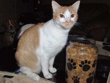 Adopted Cats Mixed Breed Jinx Amp Loki Pet Re Homing
