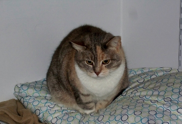 Lala – Cat to Adopt in Washington, VA