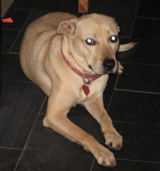 Ella Bella – Sweet Mixed Breed Dog Seeks Loving Home in New Orleans