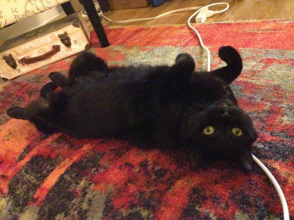 Bonnaroo – Beautiful Black Cat Seeks a Loving Home in NYC