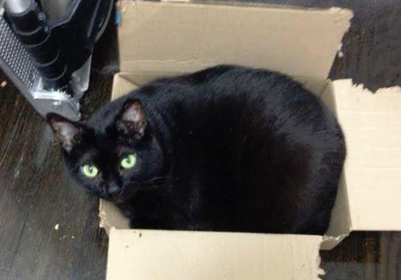 Selma – Sweet Senior Cat Seeks Loving Forever Home in NYC