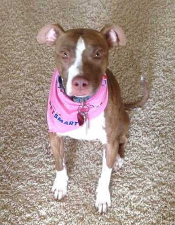 """Spyce – Egyptian """"Doggess"""" Seeks Loving Home – Supplies Included – Austin, Texas"""