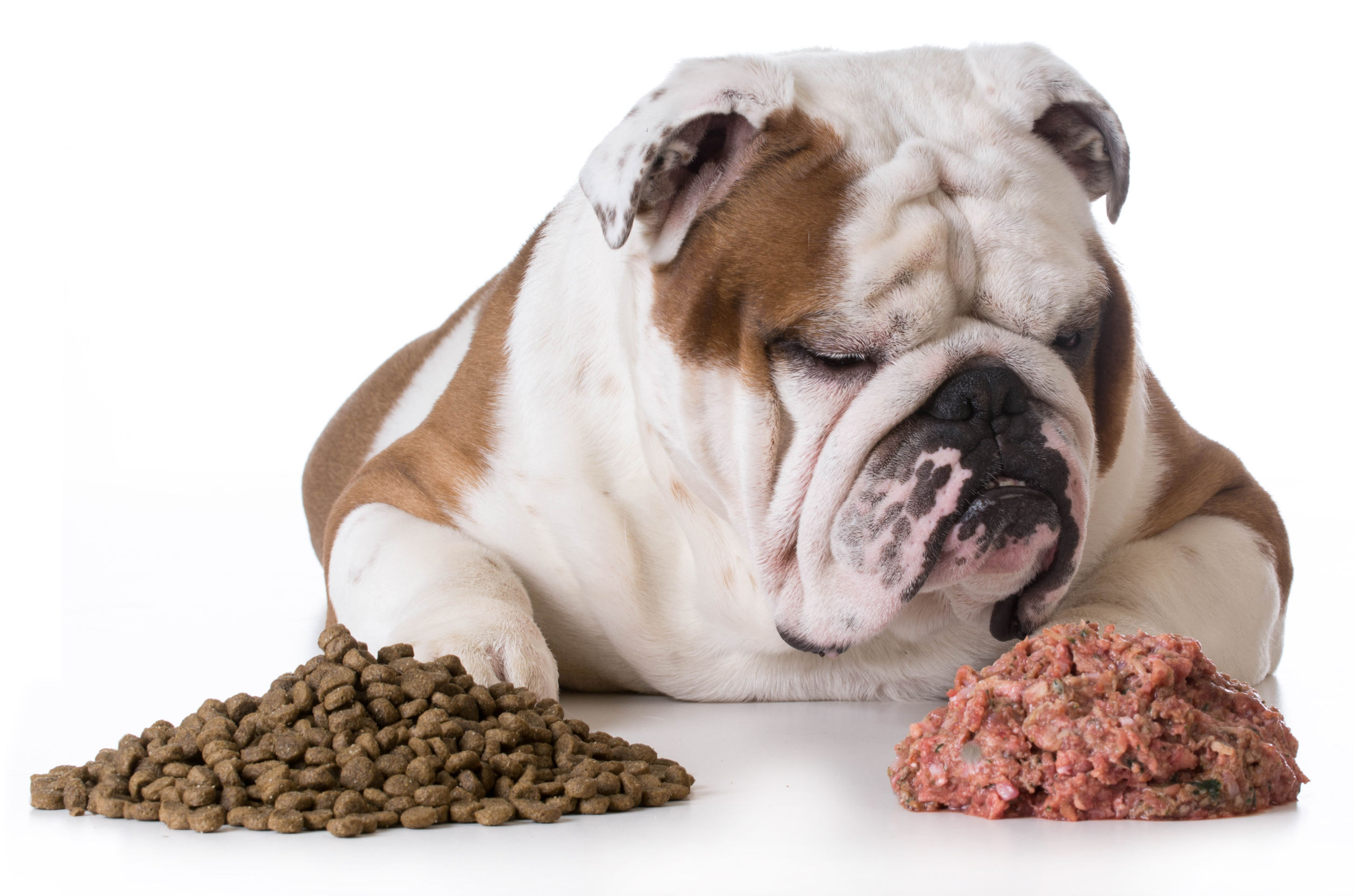 What Is The Best Dog Food Feed My Dog
